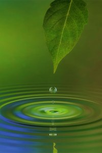 iphone-wallpaper-water-leaf